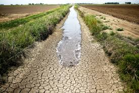 Susze przyniosą spustoszenie w rolnictwie